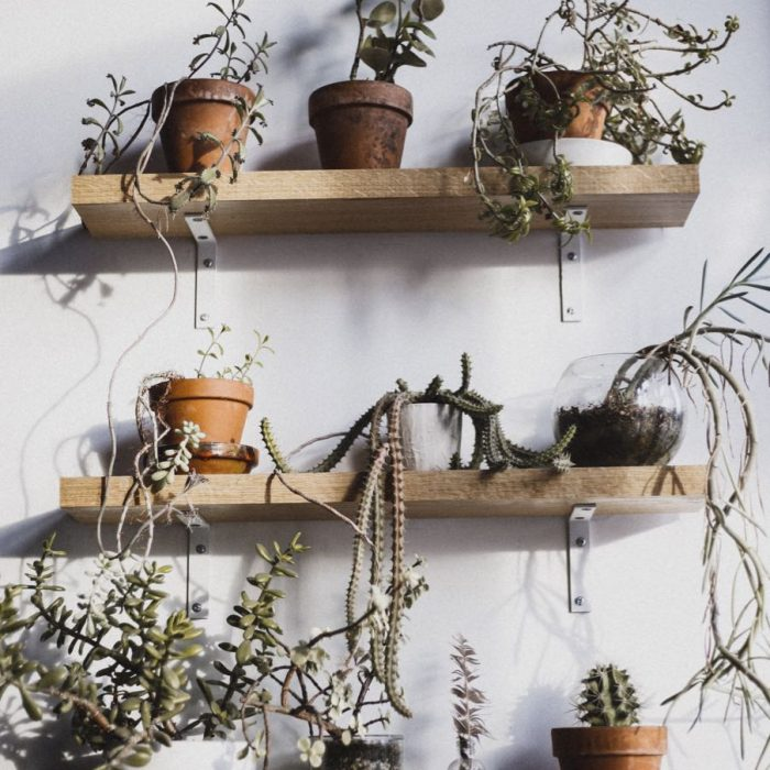 Plants on the Go